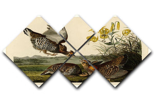Pinnated Grouse by Audubon 4 Square Multi Panel Canvas - Canvas Art Rocks - 1