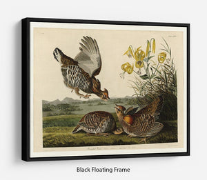 Pinnated Grouse by Audubon Floating Frame Canvas - Canvas Art Rocks - 1