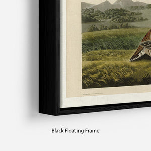 Pinnated Grouse by Audubon Floating Frame Canvas - Canvas Art Rocks - 2