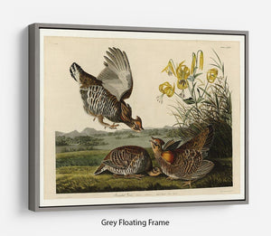 Pinnated Grouse by Audubon Floating Frame Canvas - Canvas Art Rocks - 3