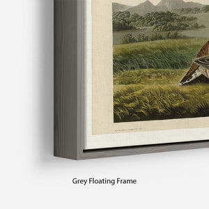 Pinnated Grouse by Audubon Floating Frame Canvas - Canvas Art Rocks - 4
