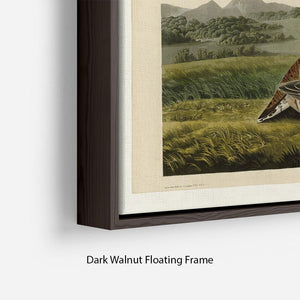 Pinnated Grouse by Audubon Floating Frame Canvas - Canvas Art Rocks - 6