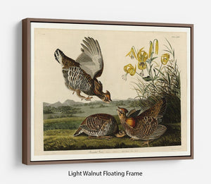 Pinnated Grouse by Audubon Floating Frame Canvas - Canvas Art Rocks 7