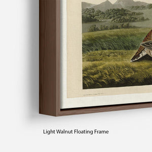 Pinnated Grouse by Audubon Floating Frame Canvas - Canvas Art Rocks - 8