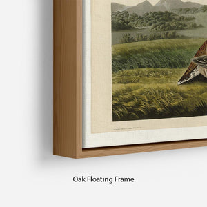 Pinnated Grouse by Audubon Floating Frame Canvas - Canvas Art Rocks - 10