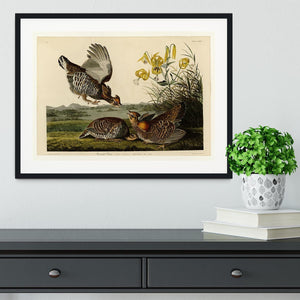 Pinnated Grouse by Audubon Framed Print - Canvas Art Rocks - 1