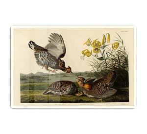 Pinnated Grouse by Audubon HD Metal Print - Canvas Art Rocks - 1