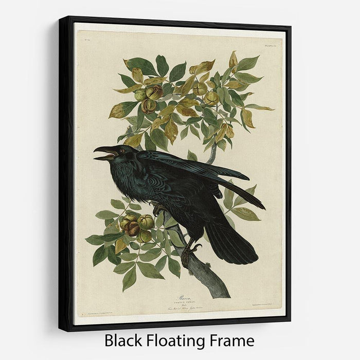 Raven by Audubon Floating Frame Canvas