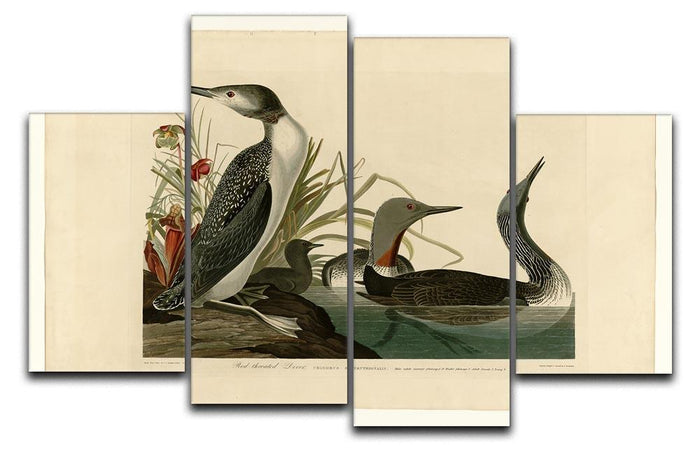 Red Throated Diver by Audubon 4 Split Panel Canvas