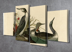Red Throated Diver by Audubon 4 Split Panel Canvas - Canvas Art Rocks - 2