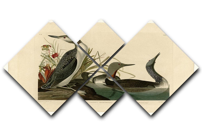 Red Throated Diver by Audubon 4 Square Multi Panel Canvas