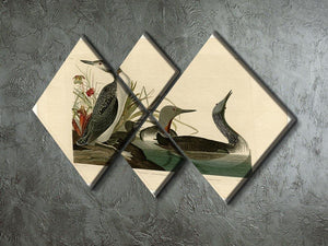 Red Throated Diver by Audubon 4 Square Multi Panel Canvas - Canvas Art Rocks - 2