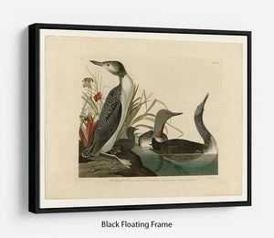 Red Throated Diver by Audubon Floating Frame Canvas - Canvas Art Rocks - 1