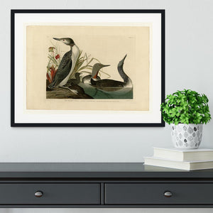 Red Throated Diver by Audubon Framed Print - Canvas Art Rocks - 1