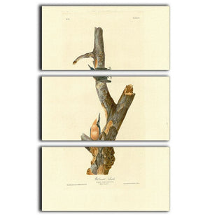 Red breasted Nuthatch by Audubon 3 Split Panel Canvas Print - Canvas Art Rocks - 1