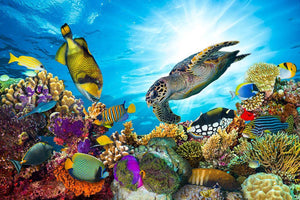 Reef with many fishes and sea turtle Wall Mural Wallpaper - Canvas Art Rocks - 1