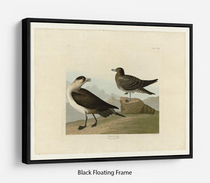 Richardsons Jager by Audubon Floating Frame Canvas - Canvas Art Rocks - 1