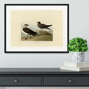 Richardsons Jager by Audubon Framed Print - Canvas Art Rocks - 1