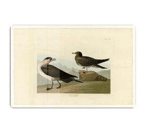 Richardsons Jager by Audubon HD Metal Print - Canvas Art Rocks - 1