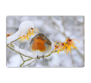 Robin in the Snow HD Metal Print - Canvas Art Rocks - 1