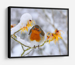 Robin in the Snow HD Metal Print - Canvas Art Rocks - 6