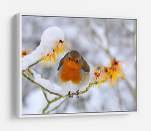 Robin in the Snow HD Metal Print - Canvas Art Rocks - 7