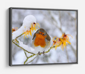 Robin in the Snow HD Metal Print - Canvas Art Rocks - 9