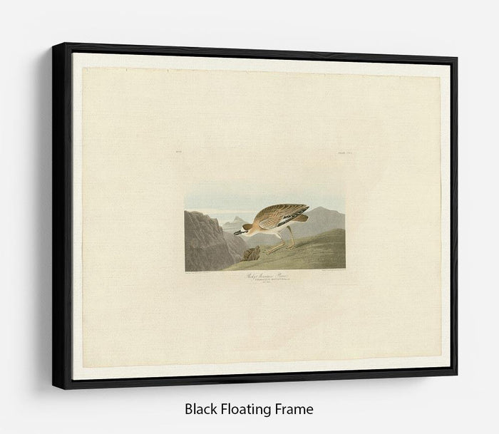 Rocky Mountain Plover by Audubon Floating Frame Canvas
