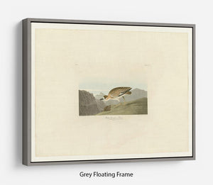 Rocky Mountain Plover by Audubon Floating Frame Canvas - Canvas Art Rocks - 3