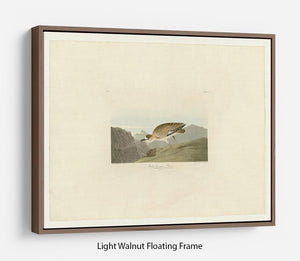 Rocky Mountain Plover by Audubon Floating Frame Canvas - Canvas Art Rocks 7