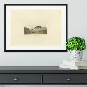 Rocky Mountain Plover by Audubon Framed Print - Canvas Art Rocks - 1