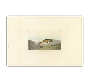 Rocky Mountain Plover by Audubon HD Metal Print - Canvas Art Rocks - 1