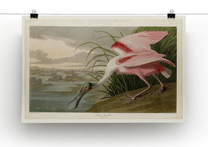 Roseate Spoonbill by Audubon Canvas Print or Poster - Canvas Art Rocks - 2