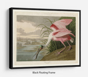 Roseate Spoonbill by Audubon Floating Frame Canvas - Canvas Art Rocks - 1