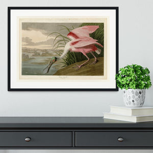 Roseate Spoonbill by Audubon Framed Print - Canvas Art Rocks - 1
