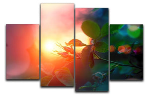 Rosebuds at sunset 4 Split Panel Canvas  - Canvas Art Rocks - 1