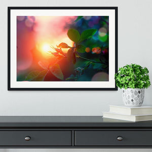Rosebuds at sunset Framed Print - Canvas Art Rocks - 1