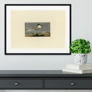 Sandwich Tern by Audubon Framed Print - Canvas Art Rocks - 1