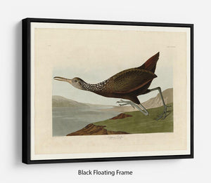 Scolopaceus Courlan by Audubon Floating Frame Canvas - Canvas Art Rocks - 1