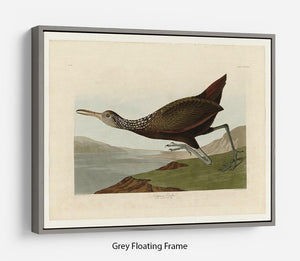 Scolopaceus Courlan by Audubon Floating Frame Canvas - Canvas Art Rocks - 3