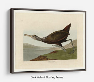 Scolopaceus Courlan by Audubon Floating Frame Canvas - Canvas Art Rocks - 5