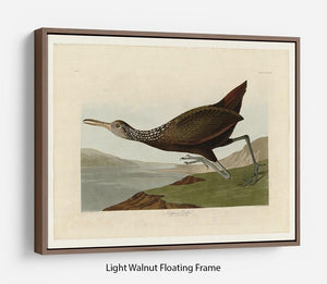 Scolopaceus Courlan by Audubon Floating Frame Canvas - Canvas Art Rocks 7