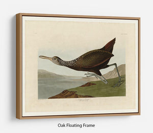 Scolopaceus Courlan by Audubon Floating Frame Canvas - Canvas Art Rocks - 9