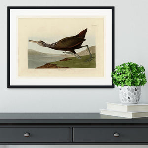 Scolopaceus Courlan by Audubon Framed Print - Canvas Art Rocks - 1