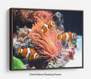 Sea anemone Floating Frame Canvas