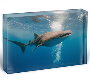 Shark Acrylic Block - Canvas Art Rocks - 1