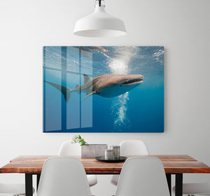 Shark HD Metal Print