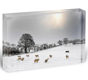 Sheep in the snow Acrylic Block - Canvas Art Rocks - 1