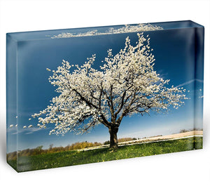 Single blossoming tree in spring Acrylic Block - Canvas Art Rocks - 1