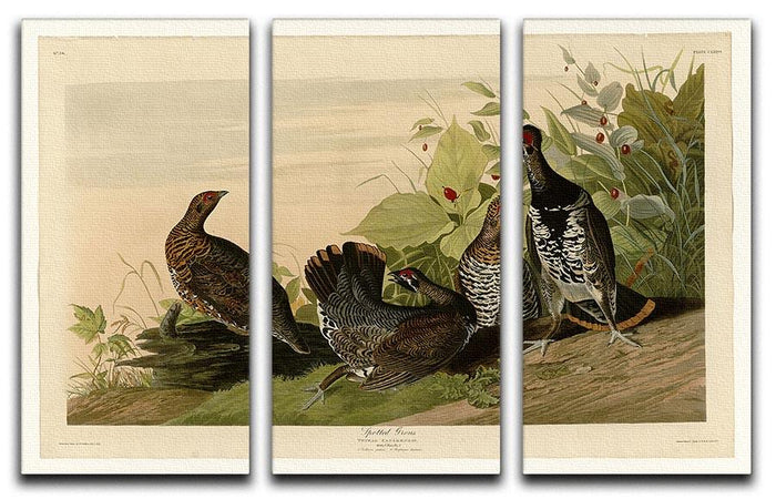 Spotted Grouse by Audubon 3 Split Panel Canvas Print